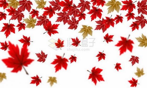 深秋飘落的红色枫叶装饰png图片免抠矢量素材