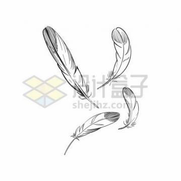 4根黑色线条素描羽毛png图片素材