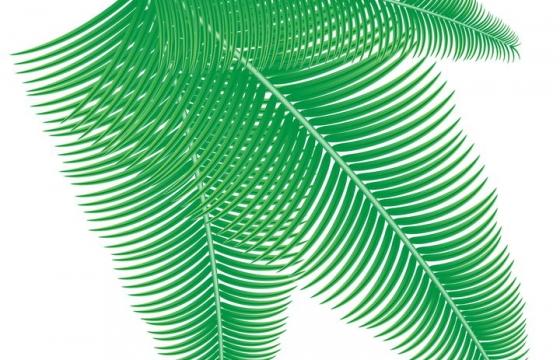 绿色的椰子树叶子装饰树叶免抠矢量图片素材