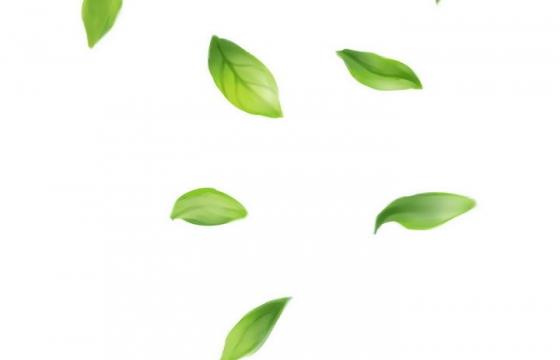飘落的绿色树叶装饰图片免抠素材