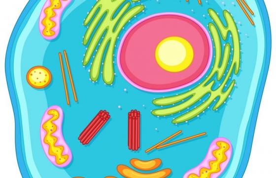 蓝色卡通风格动物细胞解剖图图片免抠素材