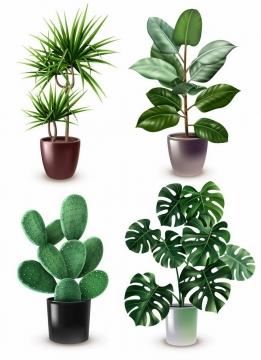 逼真的绿植盆栽花盆中的发财树仙人掌等植物png图片免抠矢量素材