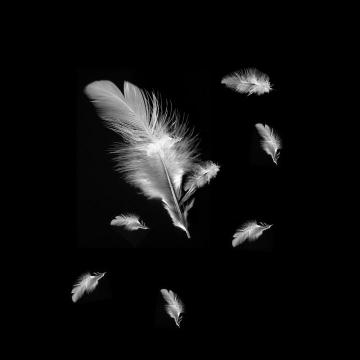 漂浮的白色羽毛图片免抠素材