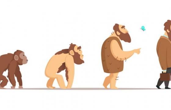 从猩猩到人的人类进化史示意图免扣图片素材