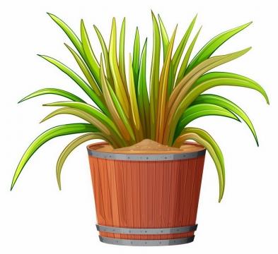 木质花盆中龙须铁绿植盆栽png图片免抠矢量素材