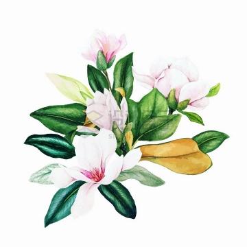 一束玉兰花鲜花花朵花卉水彩插画png图片素材
