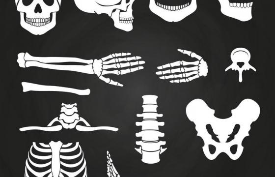 各种人体骨骼组织器官骷髅头等免扣图片素材