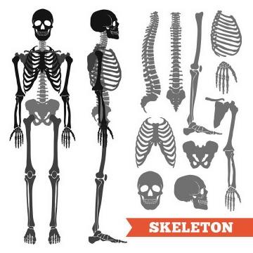 黑色风格人体正面和侧面骷髅骨架人体骨骼解剖图医学图片免抠素材