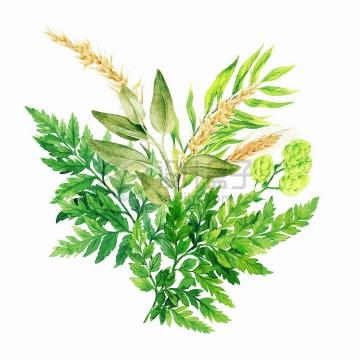 蕨类植物和草本植物的叶子水彩插画png图片素材