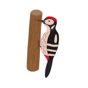 手绘风格啄木鸟鸟类动物图片免扣素材