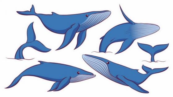 手绘风格各种游泳的蓝鲸跳跃的蓝鲸等鲸鱼海洋野生动物png图片免抠矢量素材