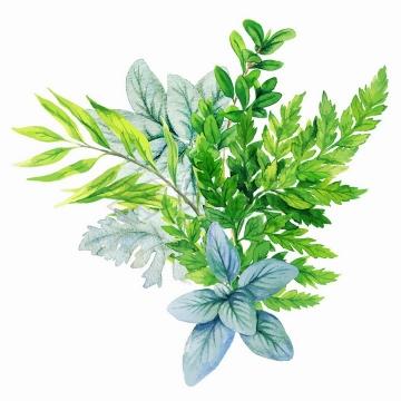 新鲜的蕨类植物绿叶水彩插画png图片素材2020040916