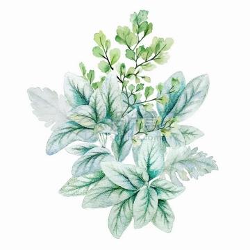 淡绿色的绿叶花束水彩插画png图片素材2020040915