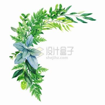 绿色树叶蕨类植物等组成的自然装饰水彩插画png图片素材2020040912