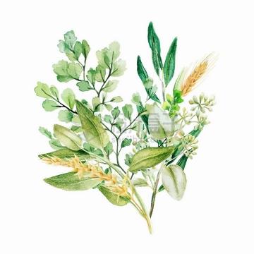 麦穗蕨类植物叶子装饰水彩插画png图片素材2020040911