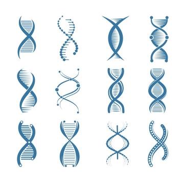 12种不同风格的蓝色DNA双螺旋结构示意图图片免抠矢量素材