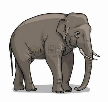手绘插图大象野生动物png图片免抠矢量素材