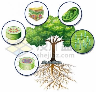 一只绿色大树和树叶细胞结构图以及植物的蒸腾作用png图片免抠矢量素材