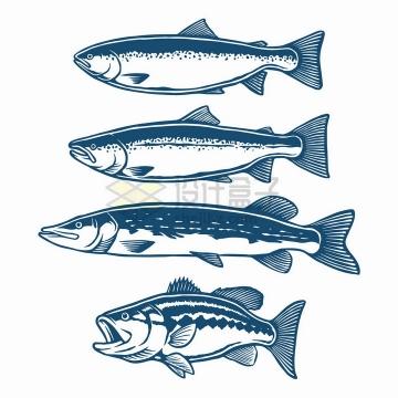 4款三文鱼海鱼手绘插画png图片素材