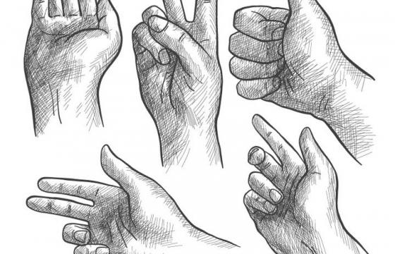 五种手绘铅笔素描风格手部动作手势大拇指免扣图片素材