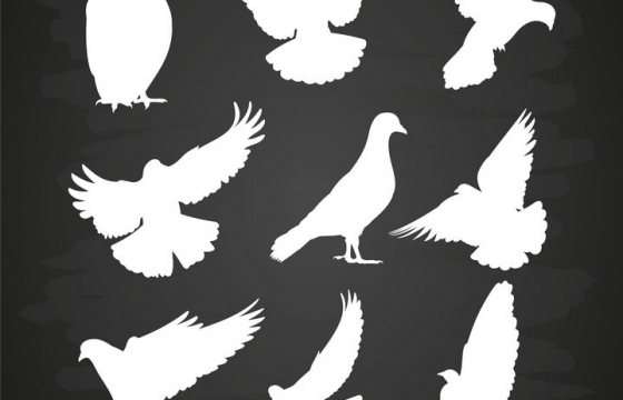 9种雪白的和平鸽剪影图片免抠素材