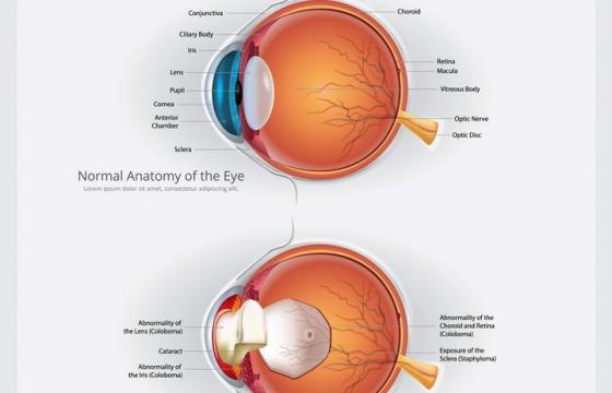 医院用的眼科眼睛眼球结构解剖图免扣图片素材