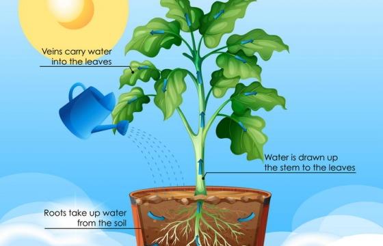 植物蒸腾作用光合作用中学生物教学图片免抠素材