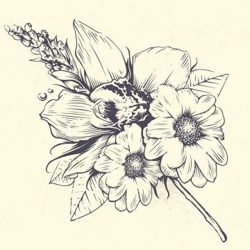 手绘素描风格盛开的菊花花朵和叶子图片免抠矢量素材
