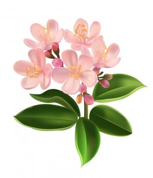 粉色兰花花卉和绿叶图片免扣素材
