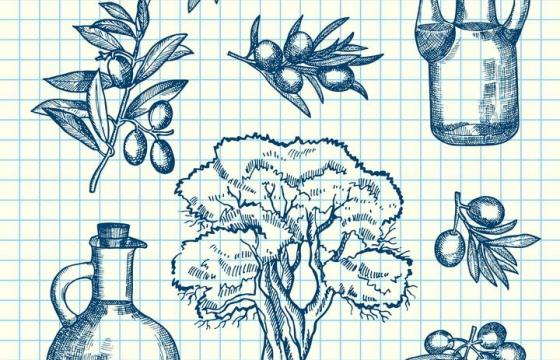 蓝色圆珠笔手绘风格橄榄种子和橄榄油免扣图片素材