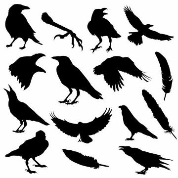 各种乌鸦鸟类羽毛动物剪影png图片免抠矢量素材
