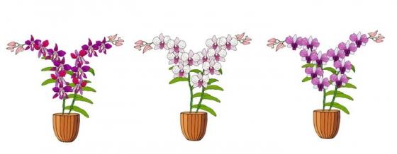 三盆手绘风格不同颜色的兰花图片免抠矢量素材