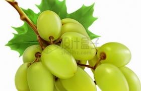 一串白牛奶葡萄绿色葡萄png图片素材