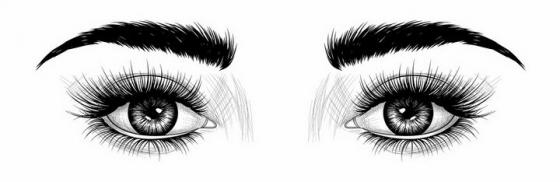 黑色素描风格美女的眼睛和眉毛人像绘画png图片免抠矢量素材