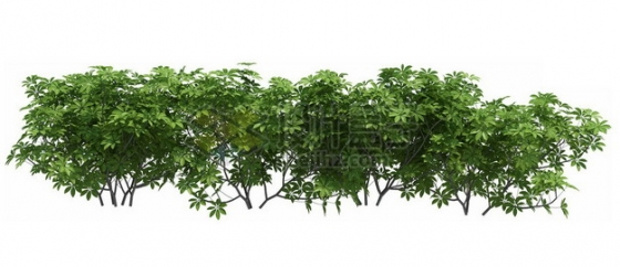 灌木丛小树苗观赏植物656858psd/png图片素材