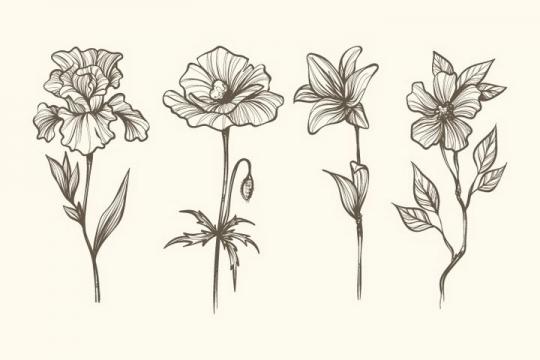4款素描风格杜鹃花百合花花朵图片免抠矢量图素材