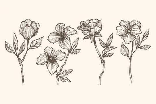 4款素描风格月季花百合花花朵图片免抠矢量图素材