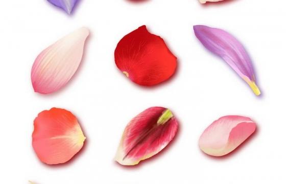 12种不同颜色和类型的花瓣图片免抠素材