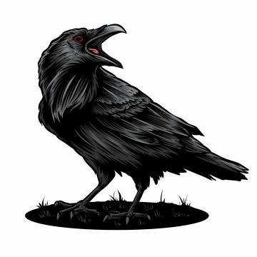 站在地面上正在大叫的乌鸦鸟类png图片免抠矢量素材