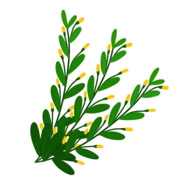 绿色的树枝和上面开着的小黄花png图片