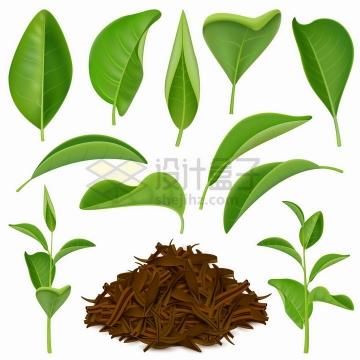 逼真的绿色茶叶叶子和干燥后的茶叶饮料png图片免抠矢量素材
