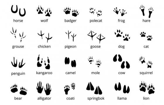 36款各种不同动物的脚印图案图片免抠矢量图素材