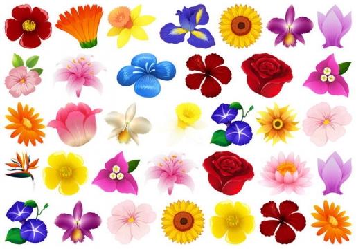 五颜六色的花朵花卉免扣图片素材