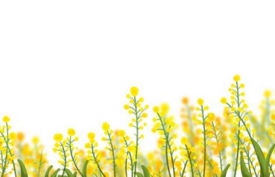 春天一从油菜花png图片装饰素材