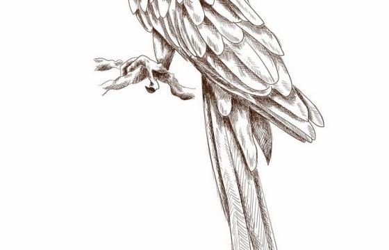 手绘素描风格枝头上的鹦鹉鸟儿png图片免抠矢量素材