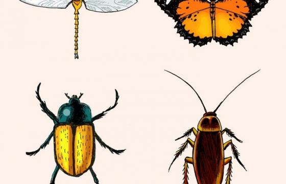 水彩画风格蜻蜓蝴蝶甲壳虫和蟑螂等昆虫图片免抠矢量素材
