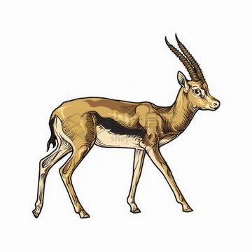 羚羊非洲大草原野生动物彩绘插图png图片免抠矢量素材