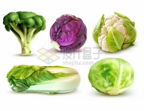 西兰花紫甘蓝花菜大白菜包菜等美味蔬菜212823png矢量图片素材