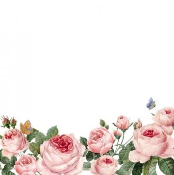 粉色牡丹花花丛装饰图片免抠素材