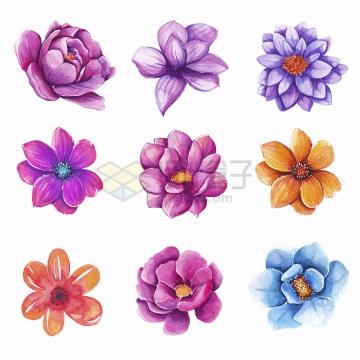 9款玫瑰花桃花月季花等水彩画紫色红色黄色花朵鲜花png图片免抠矢量素材